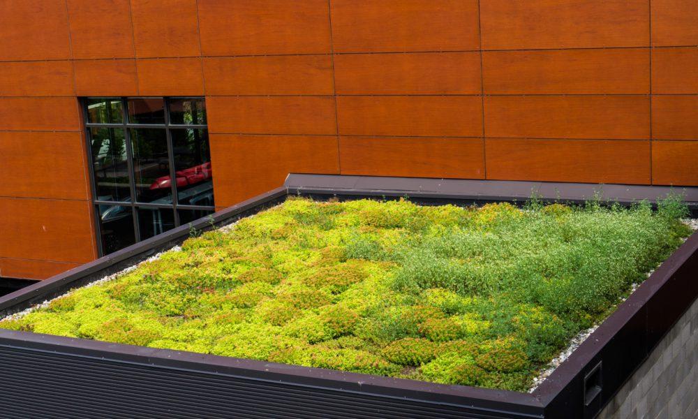 toiture verte ou vivante avec de la végétation qui pousse pour isoler, filtrer l'eau et traiter l'air dans les paysages urbains